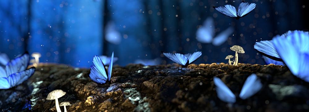 qualidade de imagem com borboletas voando